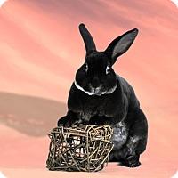 Adopt A Pet :: Dante - Marietta, GA