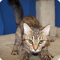 Adopt A Pet :: K-Ls4-Lola - Colorado Springs, CO