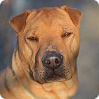 Adopt A Pet :: Oakley - Meridian, ID