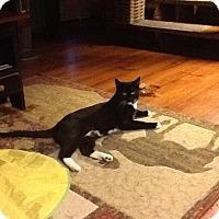 Adopt A Pet :: Toby - Portland, ME
