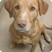 Adopt A Pet :: Axel #152166 - Apple Valley, CA