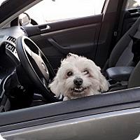 Adopt A Pet :: Finn - Los Angeles, CA