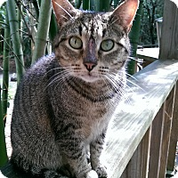 Adopt A Pet :: Selena - Naples, FL