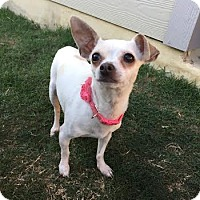 Adopt A Pet :: Milly - San Antonio, TX