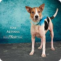 Adopt A Pet :: KIRA - Conroe, TX