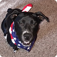 Adopt A Pet :: Mia - Grand Ledge, MI