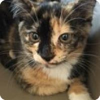 Adopt A Pet :: Luna - McHenry, IL