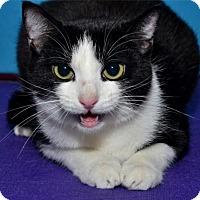 Adopt A Pet :: Heidi - Lenexa, KS