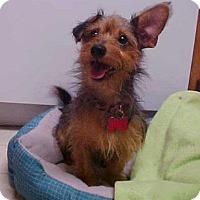Adopt A Pet :: Manny - 9 lbs - Dahlgren, VA
