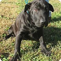 Adopt A Pet :: Tubbs - Reeds Spring, MO