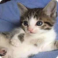 Adopt A Pet :: *PRINCESS - Sacramento, CA