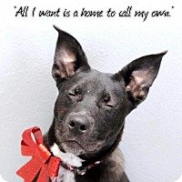 Adopt A Pet :: Kurt - Kenner, LA