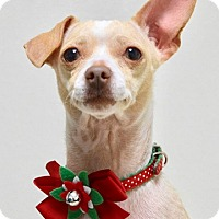 Adopt A Pet :: Chiquis - Dublin, CA
