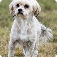 Adopt A Pet :: Georgie - Patterson, CA