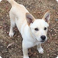 Adopt A Pet :: Astro - Lincolnton, NC