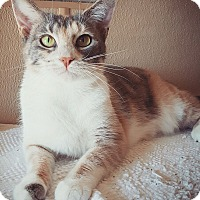 Adopt A Pet :: Nara - Fredericksburg, TX