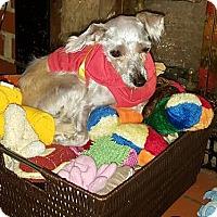 Adopt A Pet :: Lailah - Cary, NC