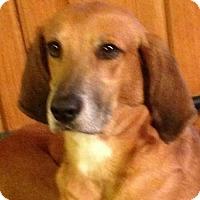 Adopt A Pet :: Susie Q - Allentown, PA