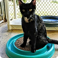 Adopt A Pet :: Taquito - Umatilla, FL