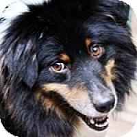 Adopt A Pet :: Griffin - PENDING - Savannah, GA