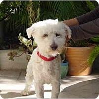 Adopt A Pet :: Kasper - La Costa, CA