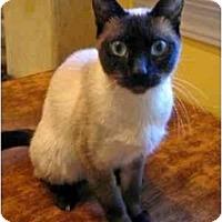 Adopt A Pet :: isabelle - Davis, CA