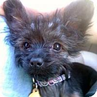 Adopt A Pet :: Molly - stella, NC
