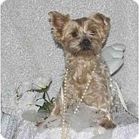 Adopt A Pet :: Allie - The Village, FL