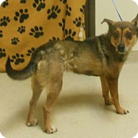 Adopt A Pet :: Lil Momma - Gary, IN