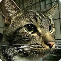 Adopt A Pet :: Hercules - Winchester, CA