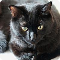 Adopt A Pet :: Fudgie - Alexandria, VA