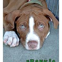Adopt A Pet :: Frankie - La Habra, CA