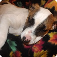 Adopt A Pet :: Clark - Mechanicsburg, PA
