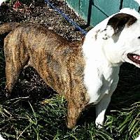 Adopt A Pet :: Bloom-sponsored - Leitchfield, KY