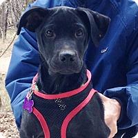 Adopt A Pet :: Levi - Wimberley, TX