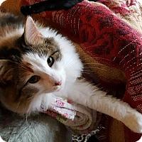 Adopt A Pet :: Kissy - Harrisburg, NC