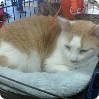 Adopt A Pet :: Sullivan - Harrisburg, NC