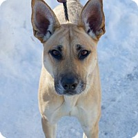 Adopt A Pet :: Shiloh - Chester Springs, PA