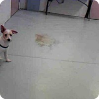 Adopt A Pet :: RITA - Conroe, TX