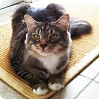 Adopt A Pet :: Teddy - Marco Island, FL