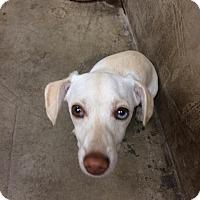 Adopt A Pet :: PENNY - Gustine, CA