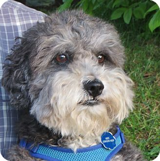 Seattle Small Dog Rescue