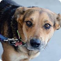 Adopt A Pet :: Talia - San Diego, CA