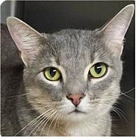 Adopt A Pet :: Zanna - Springdale, AR