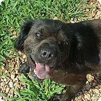 Adopt A Pet :: Princess - Neosho, MO
