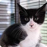Adopt A Pet :: Quartz - Sarasota, FL