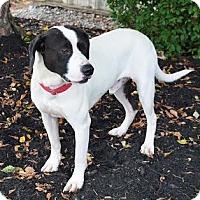 Adopt A Pet :: Oliver Twist - Union City, TN