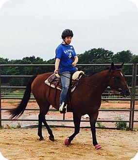 Quarterhorse Mix for adoption in Guthrie, Oklahoma - Meggie