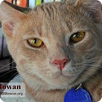 Adopt A Pet :: Rowan - Temecula, CA