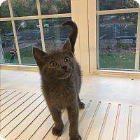Adopt A Pet :: Shawn - Peace Dale, RI